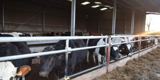Landbouwbedrijf melkkoeien met bedrijfswoning te Thimister